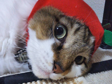 AppleBoyと犬猫みなしご救援隊中谷さん(=^ェ^=)