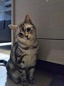 猫 お留守番 福岡