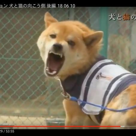 犬と猫の向こう側 後編🐾福島原発事故でのペットたち