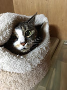 猫留守番ペットシッター福岡