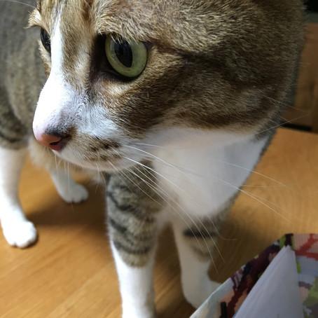 猫楽san🐾キャットシッター研修最終回