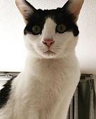 猫 旅行 福岡市