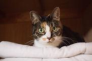 猫 旅行 ペットシッター福岡