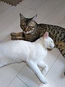 猫 入院 預ける 福岡