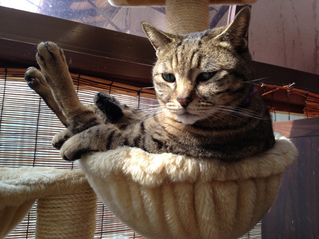 英語教材は石川さん、そして猫のゆきさん