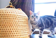 猫 預ける 福岡