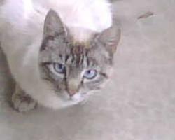 Mom Kitty