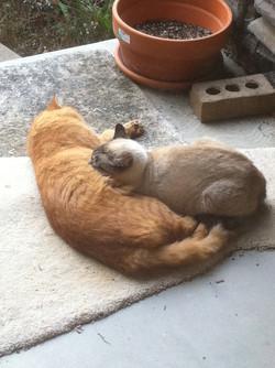 Tom & Mom Kitty