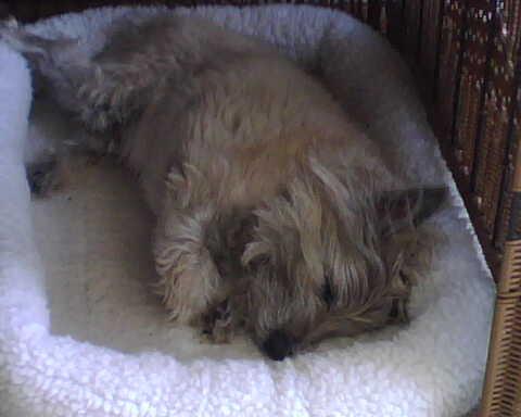Bandit-sleeping.jpg