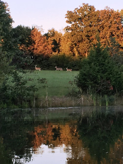 pond and deer