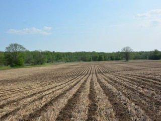 Strip-Till Series: Pros and Cons
