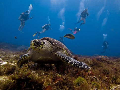 group turtle.jpg