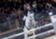 Fiera Cavalli Competizion