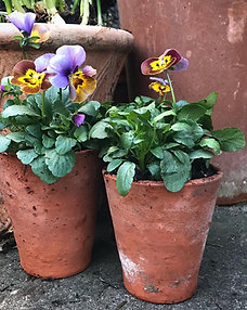 """Potted Pansies in Tom Thumb 3"""" terracotta pots - set of 3"""