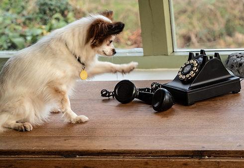 Frida Phone.jpg