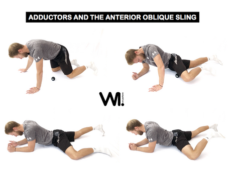The neglected Adductors and the Anterior Oblique Sling