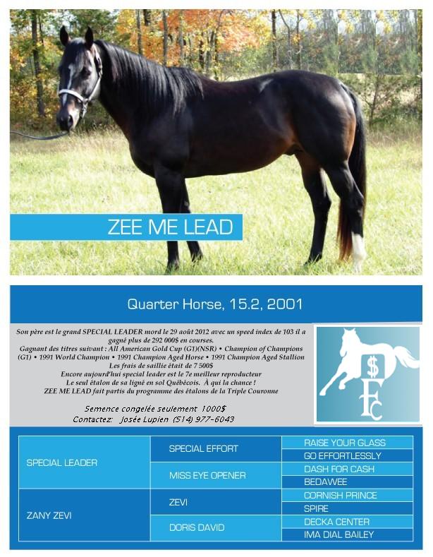 Zee Me Lead QH Stallion Étalon Québécois