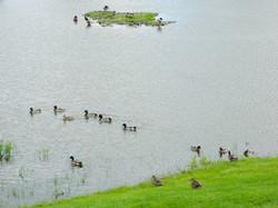 Center Pond Wildlife