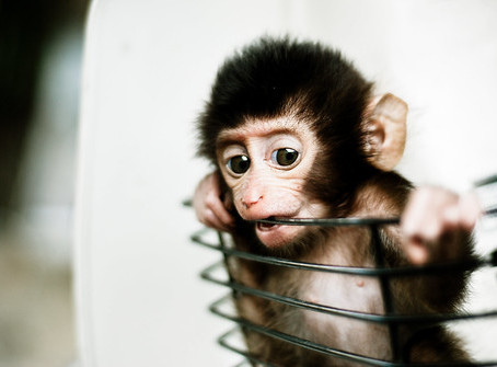 Blog vacation (and baby monkey pic)
