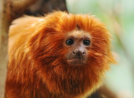Monkey Week: 10 Monkey Mashups