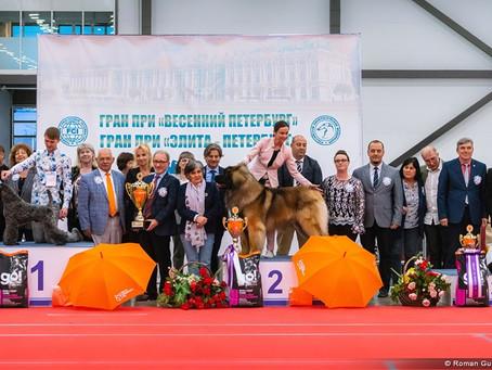 "05/05/2019  INTERNATIONAL DOG SHOW CACIB - FCI Grand Prix ""Elite Petersburg 2019"""