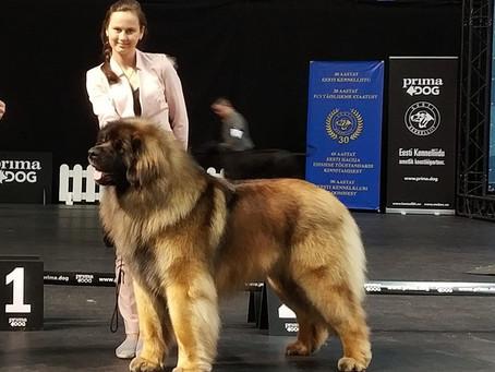 "13.04.2019. INTERNATIONAL DOG SHOW ""TALLIN WINNER 2019"""
