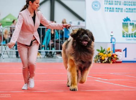 "04/05/2019  INTERNATIONAL DOG SHOW CACIB - Grand Prix ""Spring Petersburg 2019"""