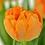 Thumbnail: Tulpe orange - 11cm Topf