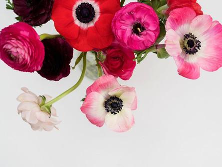Pflanzenporträt: Anemone