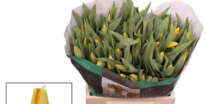 Tulpe einfache Blüte gelb