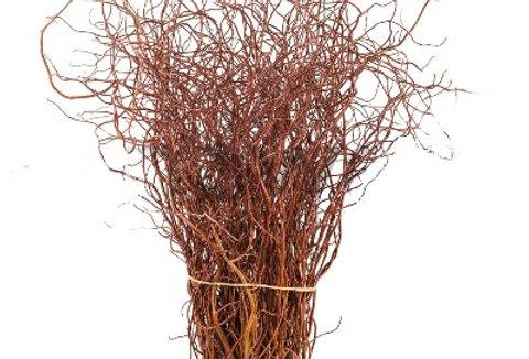Korkenzieher Weide