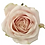 Thumbnail: Rosen Sweet Avalanche  ROSA