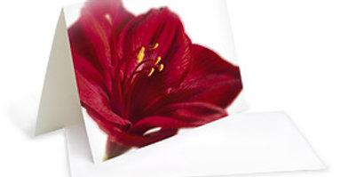 Motivkarte - Rote Amaryliss