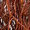 Thumbnail: Korkenzieher Weide