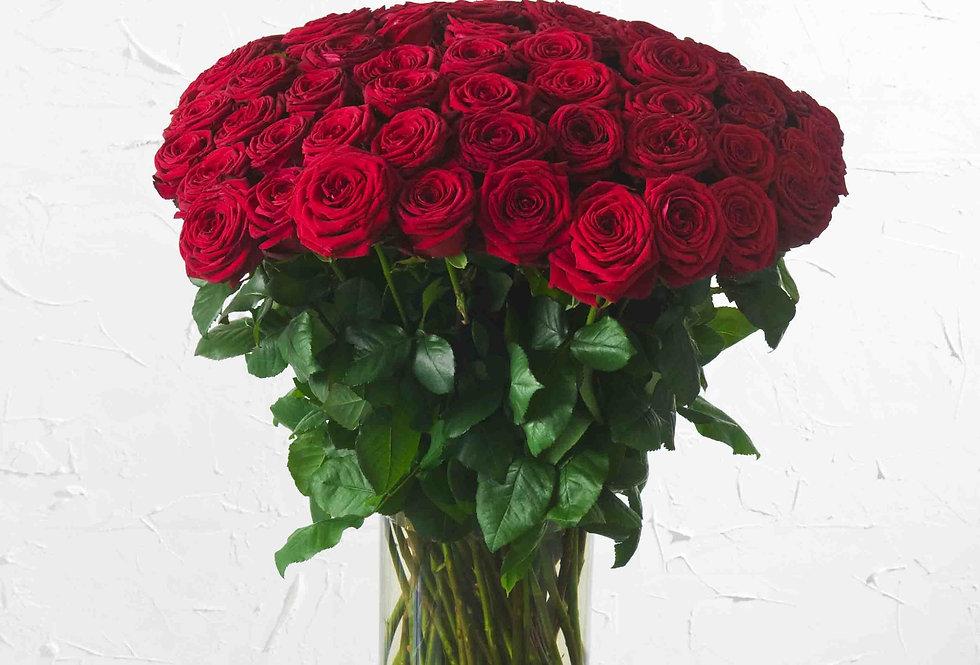 Rose Red Naomi Rot