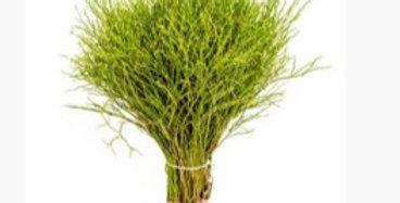 Grün Heidelbeere