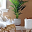 Thumbnail: Areca Palme  - Goldfruchtpalme inkl. Topf