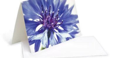 Motivkarte - Blaue Kornblume