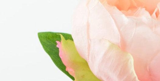 Peonie  rose