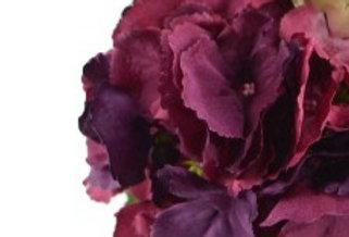 Hortensien Blüte - burgund