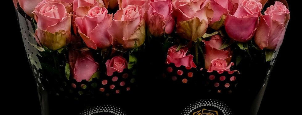 Rose  Hermosa