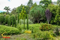 182 Long Rd Tamborine Mountain - Front Gardens 1