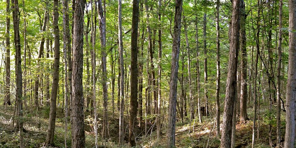 Woodland Restoration Day