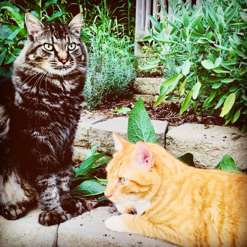 farm kitts