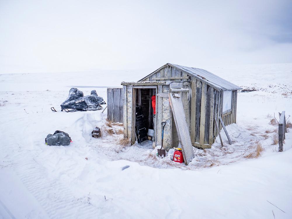 nunivak island cabin reindeer