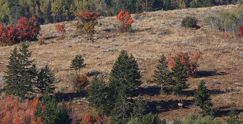 Hunters Stalking Bull Elk