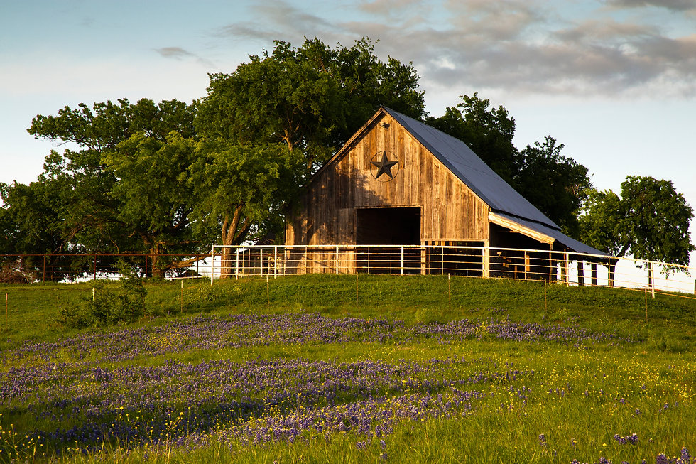 Bluebonnet Trail Barn Near Ennis, Texas.