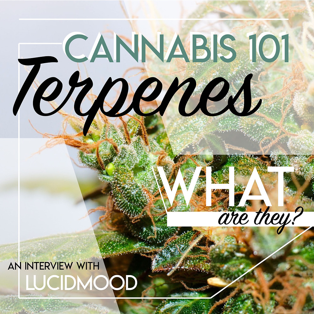 Cannabis 101: Terpenes, What are they