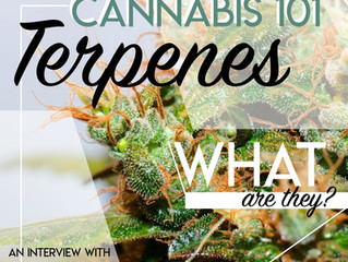 Cannabis 101: Terpenes, an Interview with LucidMood