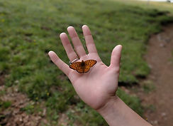L'envol du papillon.JPG